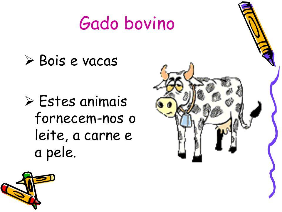 Gado bovino Bois e vacas