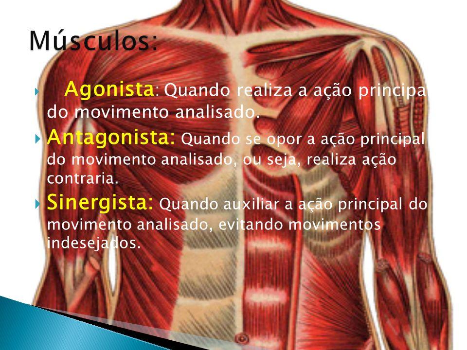 Músculos: Agonista: Quando realiza a ação principal do movimento analisado.