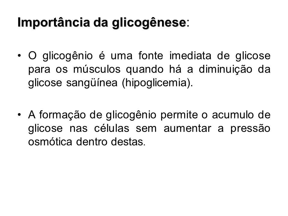 Importância da glicogênese: