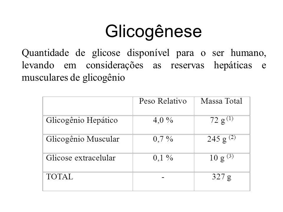 Glicogênese Quantidade de glicose disponível para o ser humano, levando em considerações as reservas hepáticas e musculares de glicogênio.