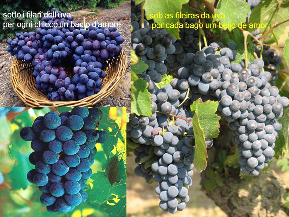 sotto i filari dell uva per ogni chicco un bacio d amore.