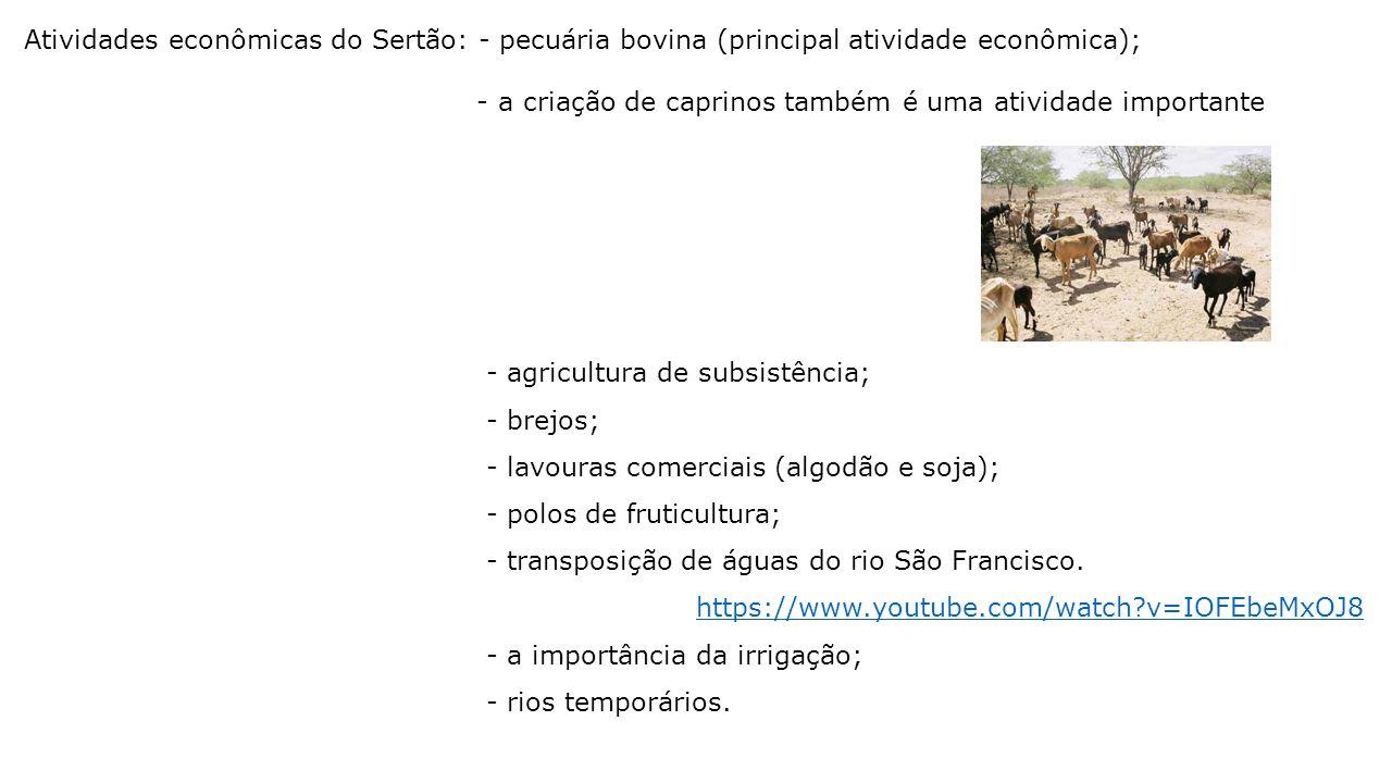 Atividades econômicas do Sertão: - pecuária bovina (principal atividade econômica);
