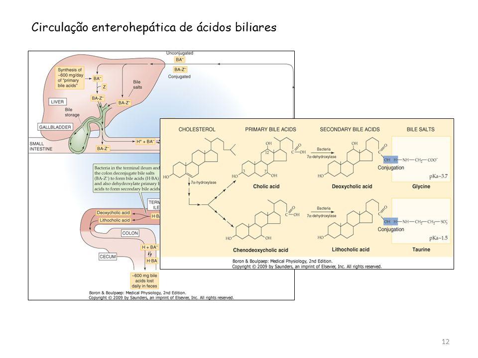 Circulação enterohepática de ácidos biliares