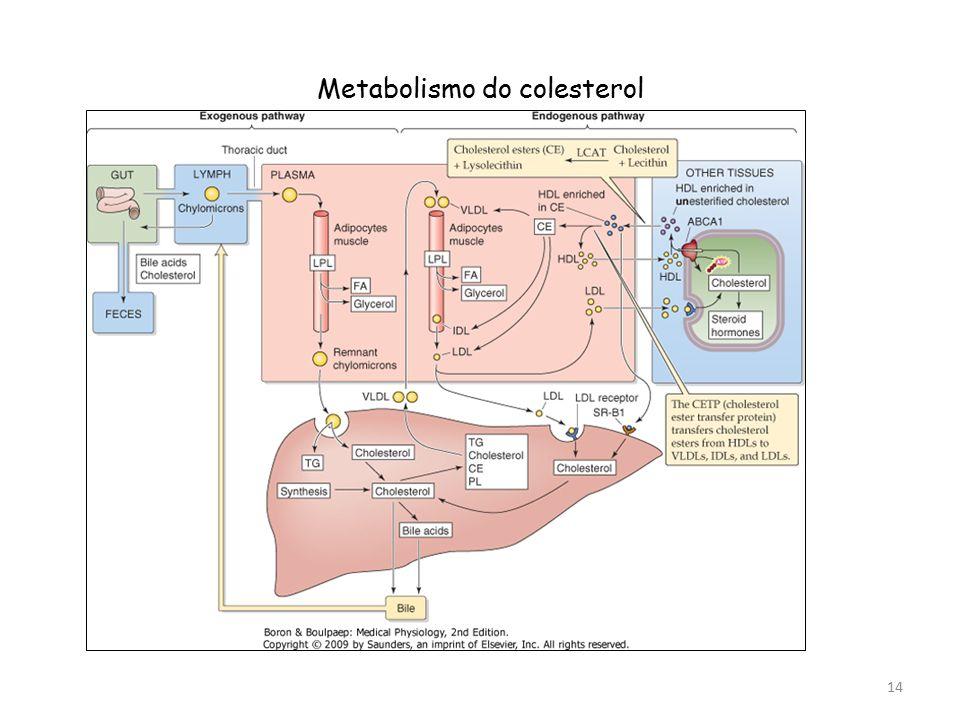 Metabolismo do colesterol