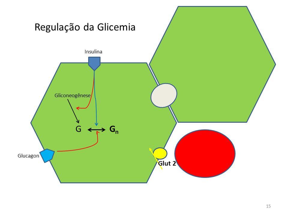 Regulação da Glicemia Insulina Gliconeogênese G Gn Glucagon Glut 2