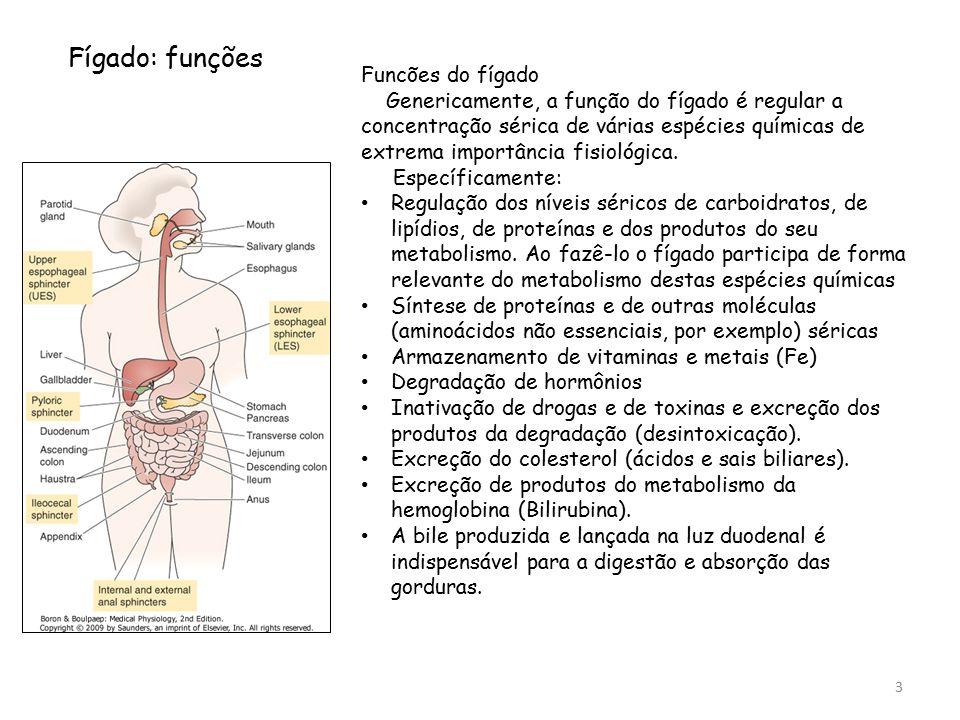 Fígado: funções