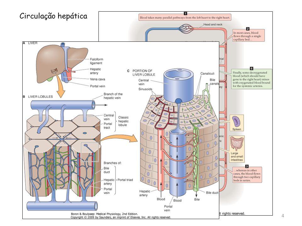Circulação hepática