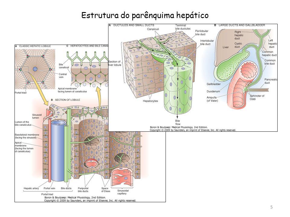Estrutura do parênquima hepático