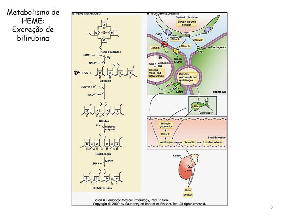Metabolismo de HEME: Excreção de bilirubina