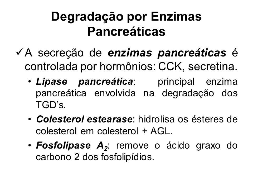 Degradação por Enzimas Pancreáticas