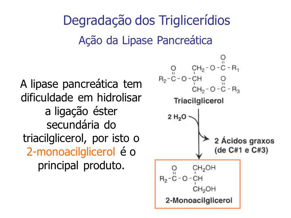 Degradação dos Triglicerídios