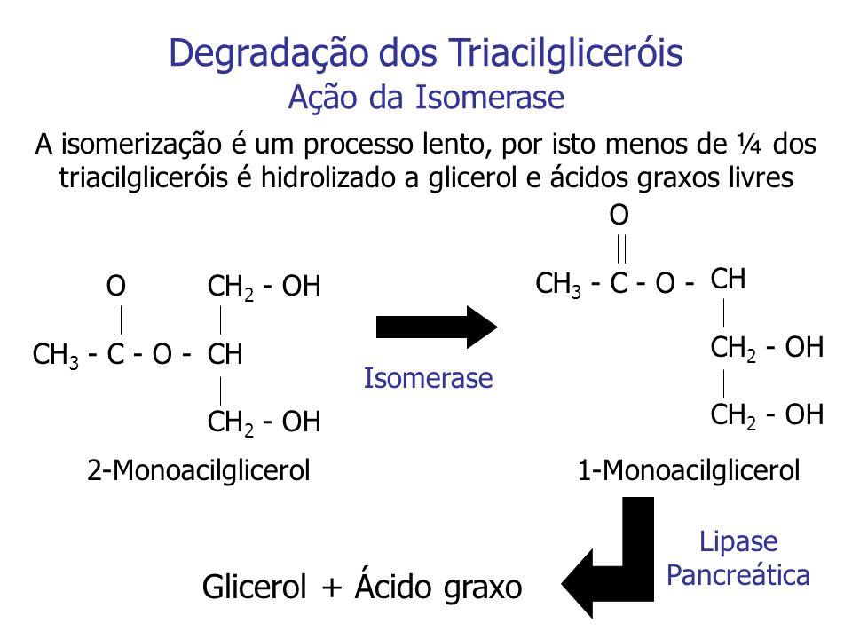 Degradação dos Triacilgliceróis