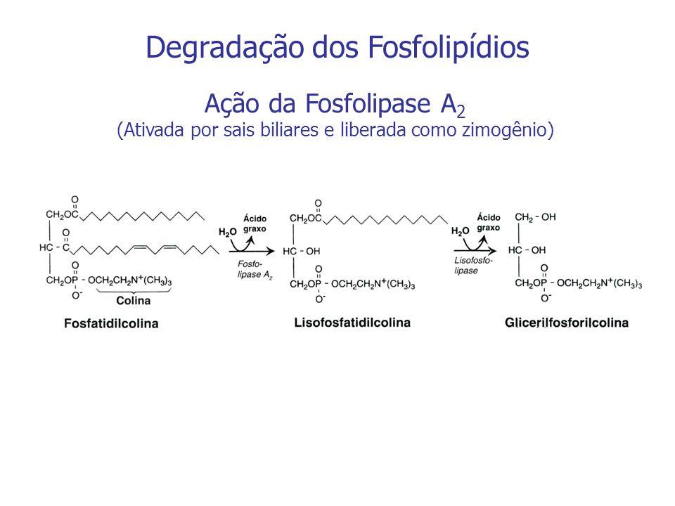 Degradação dos Fosfolipídios