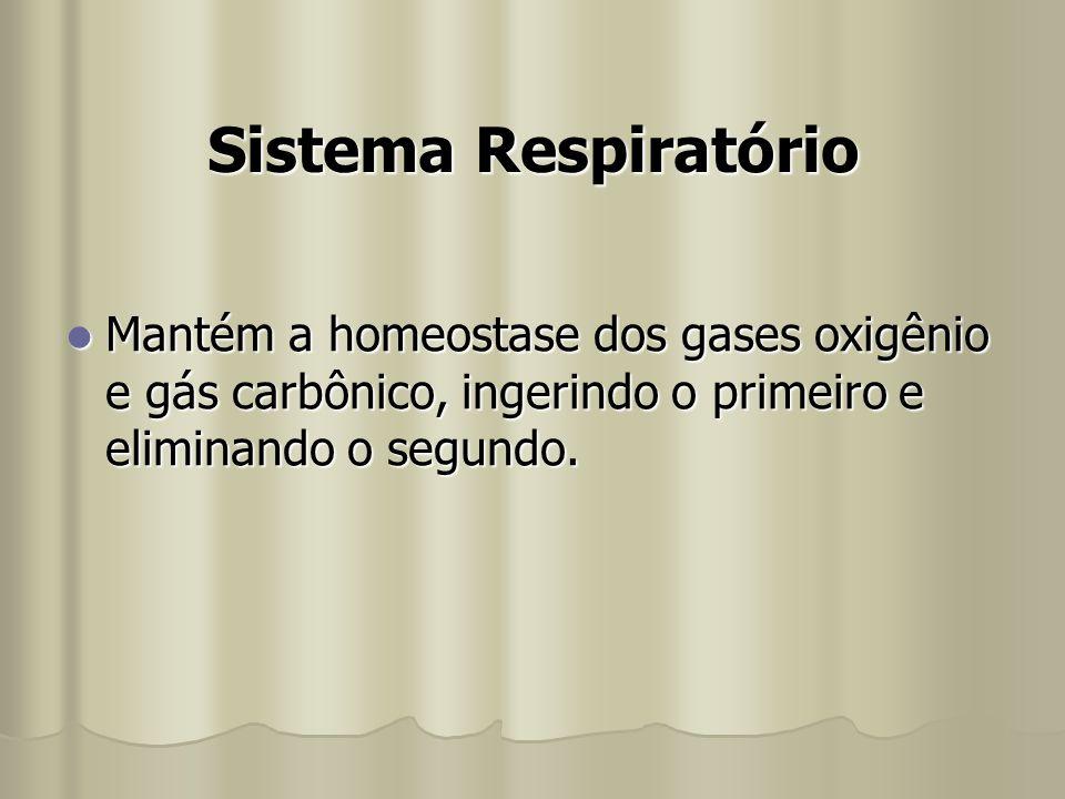 Sistema Respiratório Mantém a homeostase dos gases oxigênio e gás carbônico, ingerindo o primeiro e eliminando o segundo.