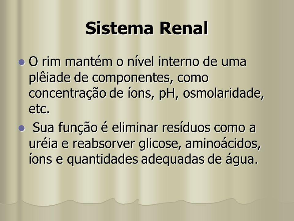 Sistema Renal O rim mantém o nível interno de uma plêiade de componentes, como concentração de íons, pH, osmolaridade, etc.
