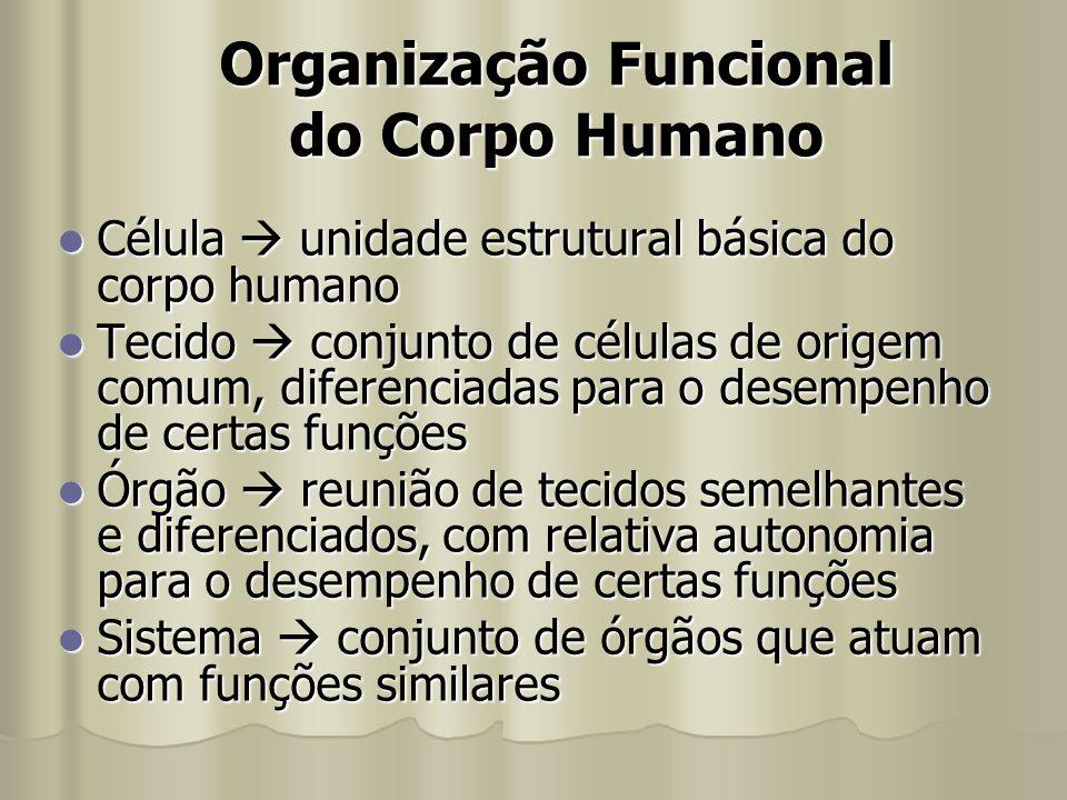 Organização Funcional do Corpo Humano