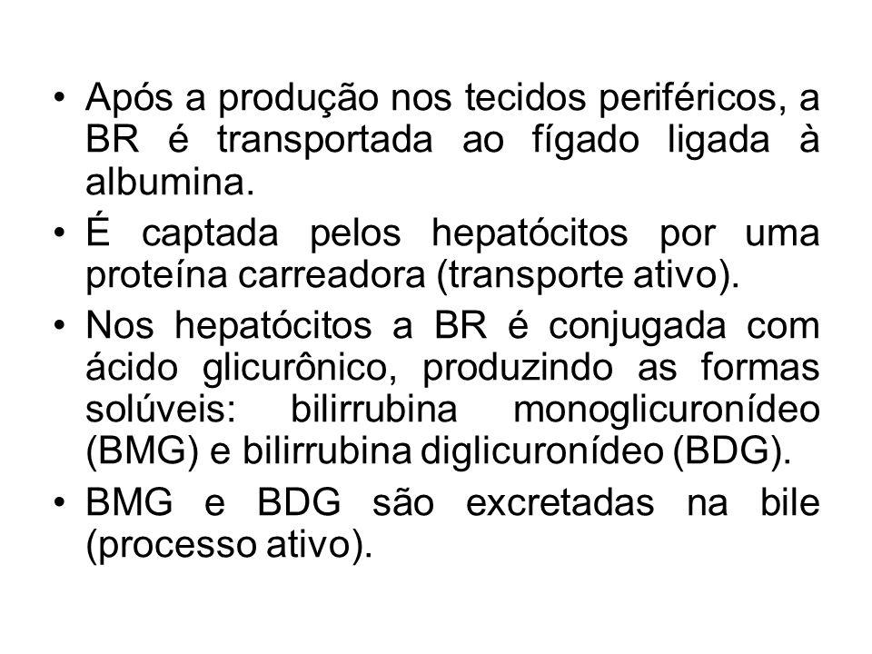 Após a produção nos tecidos periféricos, a BR é transportada ao fígado ligada à albumina.