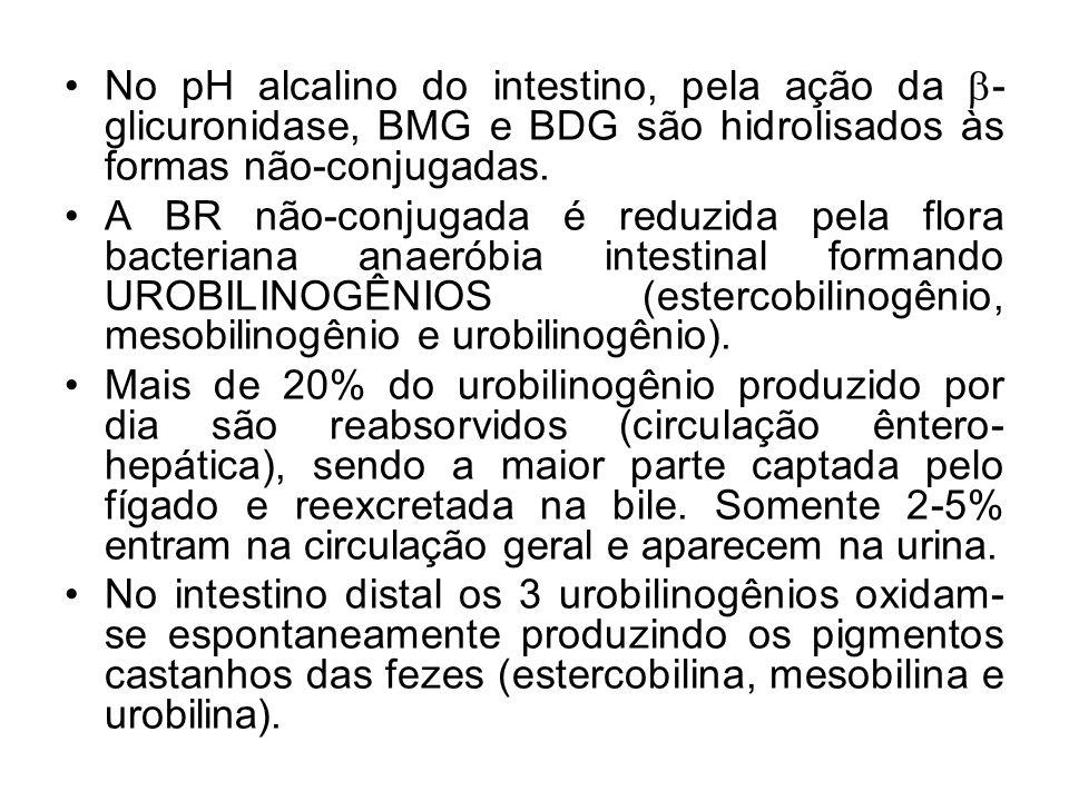 No pH alcalino do intestino, pela ação da -glicuronidase, BMG e BDG são hidrolisados às formas não-conjugadas.