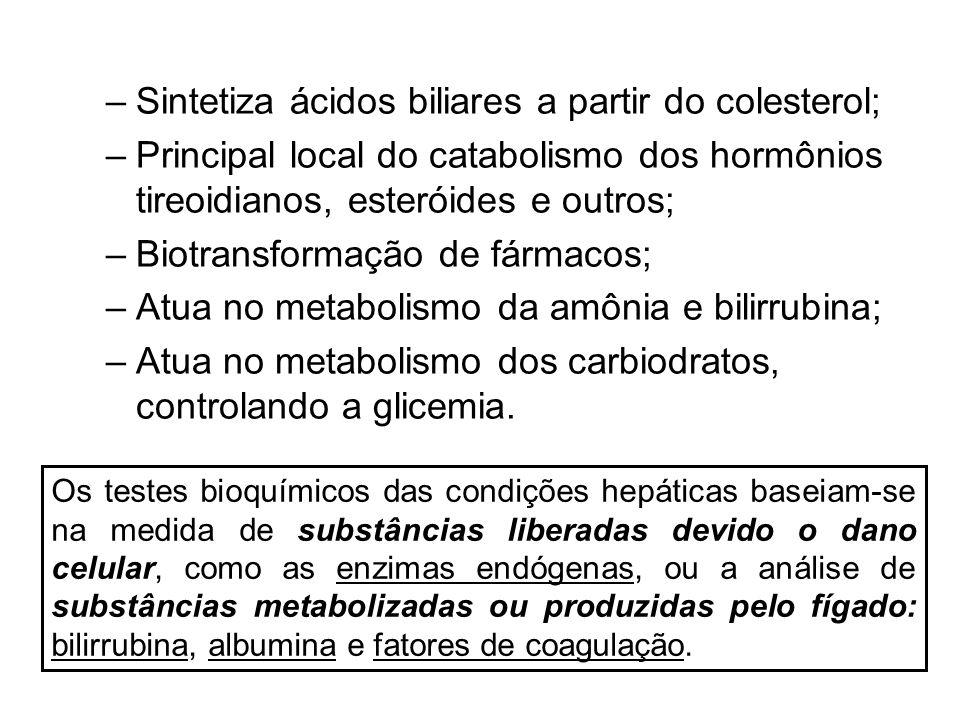 Sintetiza ácidos biliares a partir do colesterol;