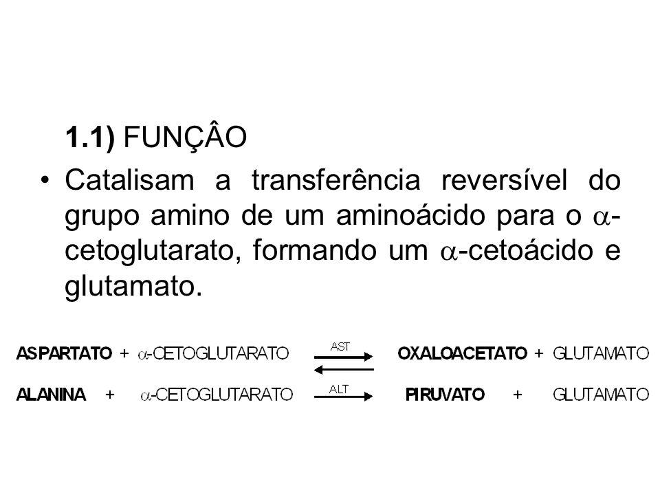 1.1) FUNÇÂO Catalisam a transferência reversível do grupo amino de um aminoácido para o a-cetoglutarato, formando um a-cetoácido e glutamato.