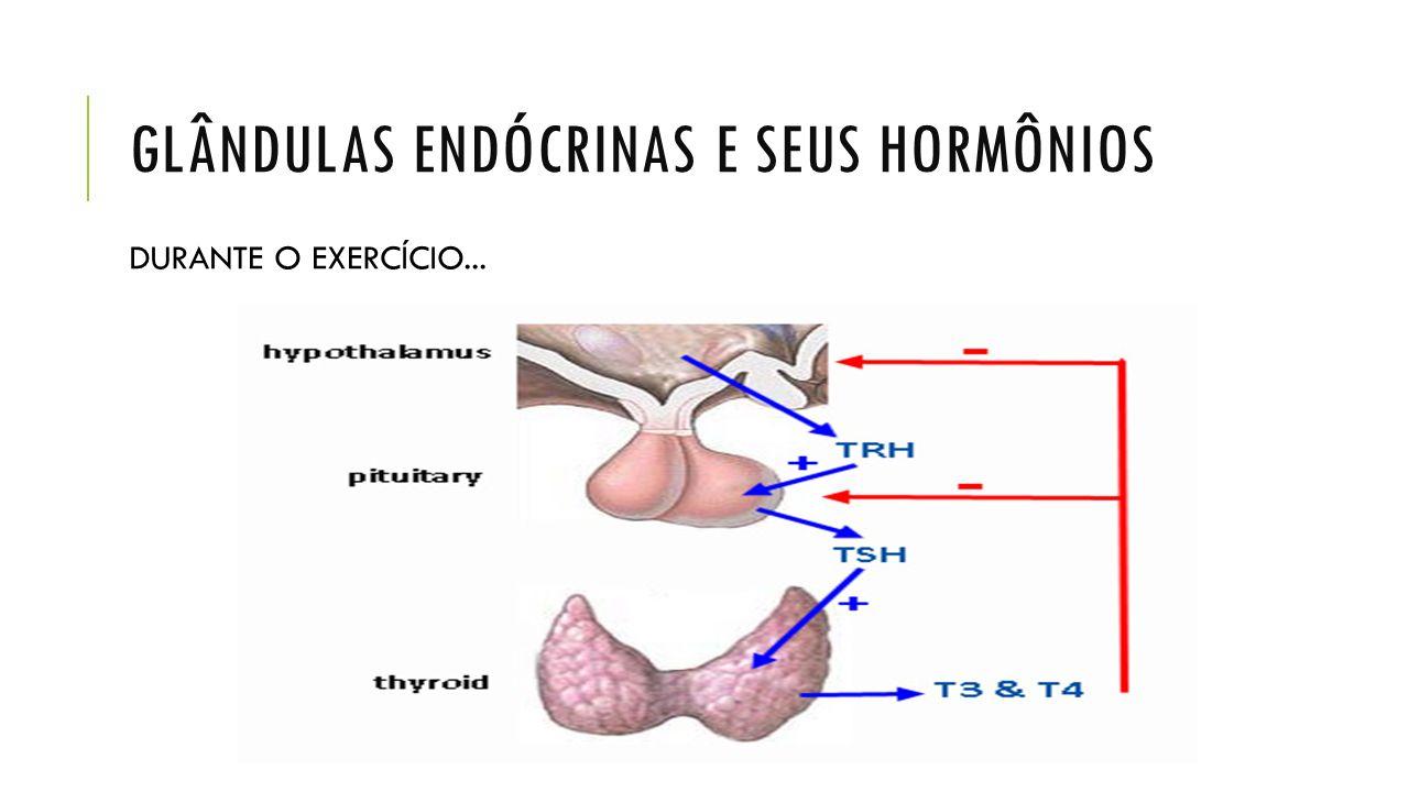 Glândulas endócrinas e seus hormônios