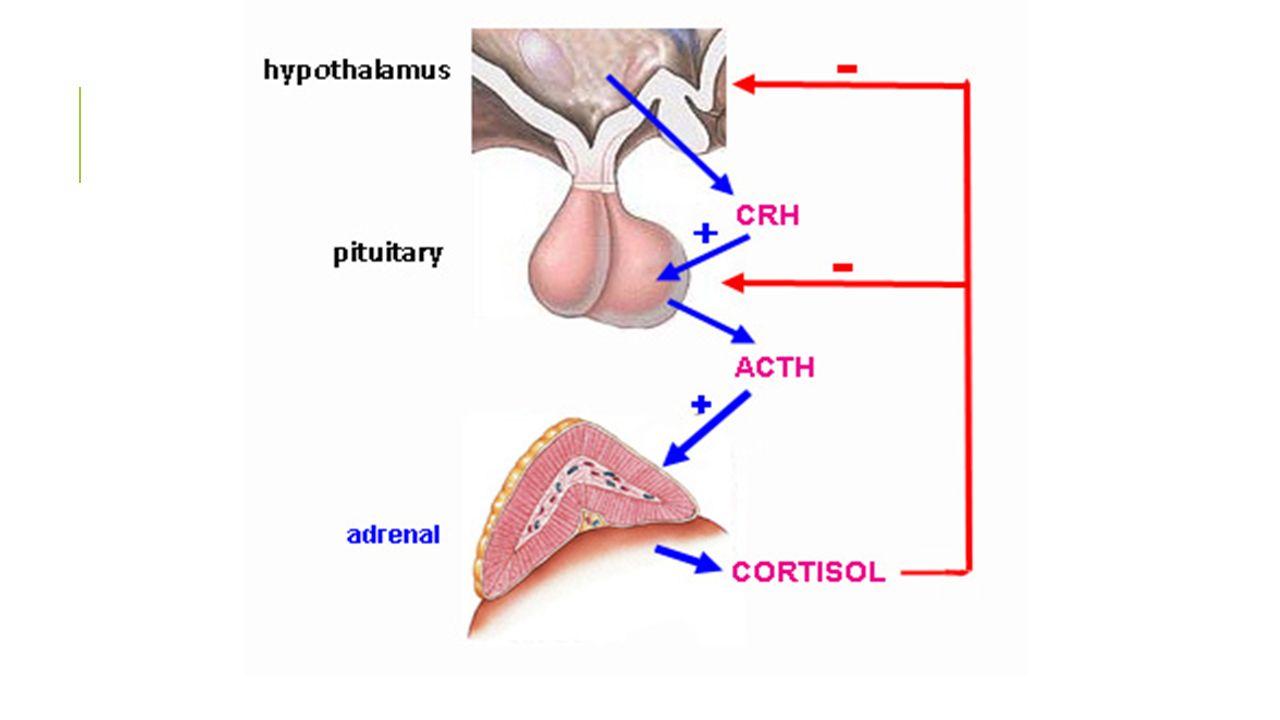 Crh: hormônio liberador de corticotrofina