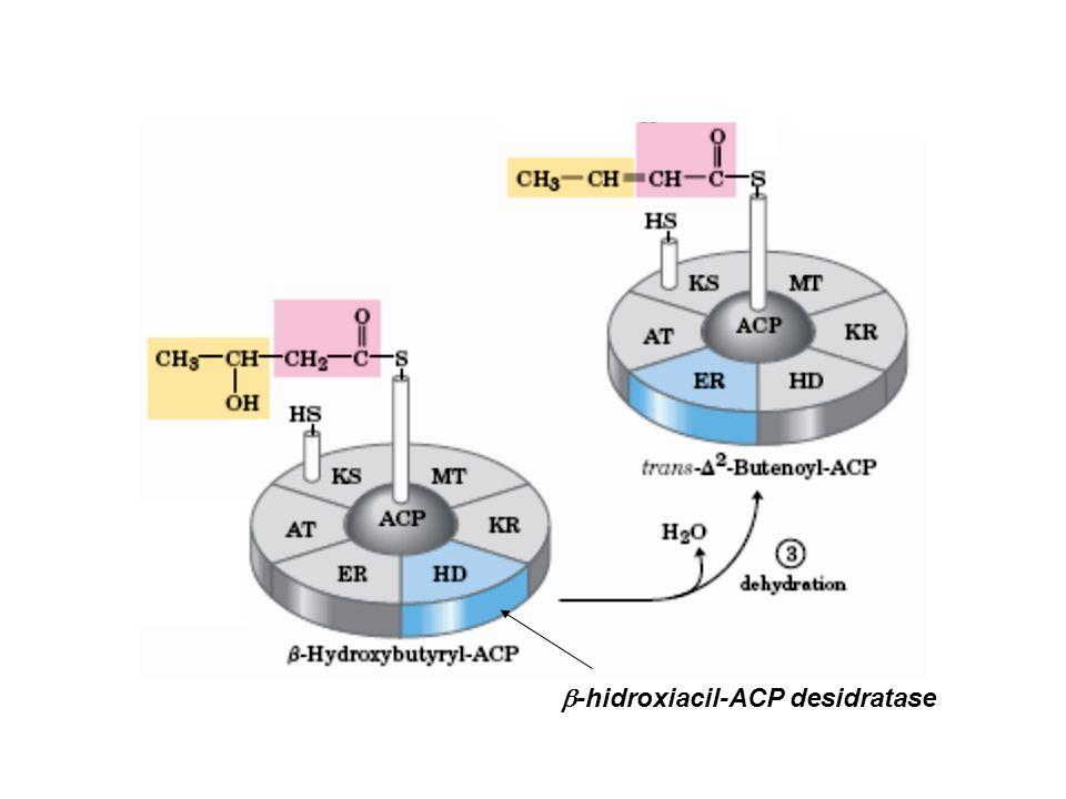 b-hidroxiacil-ACP desidratase