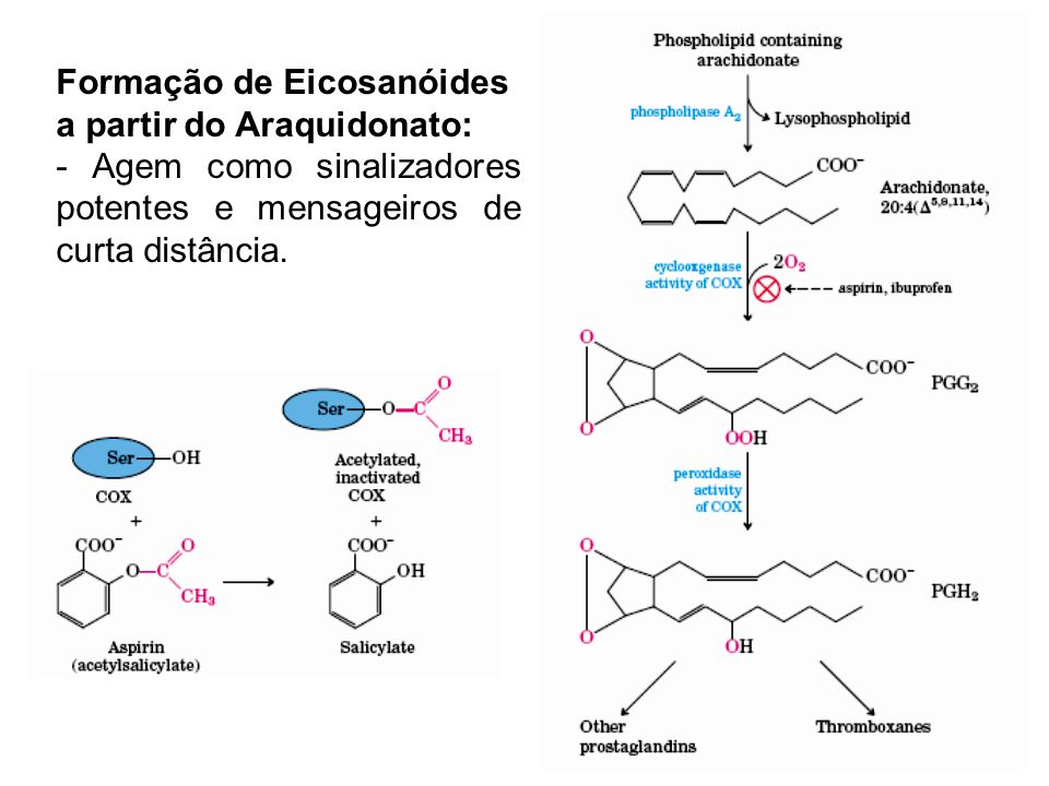 Formação de Eicosanóides
