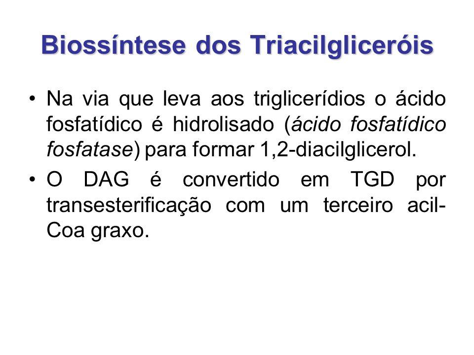 Biossíntese dos Triacilgliceróis