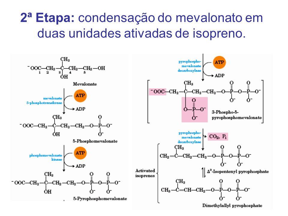 2ª Etapa: condensação do mevalonato em duas unidades ativadas de isopreno.