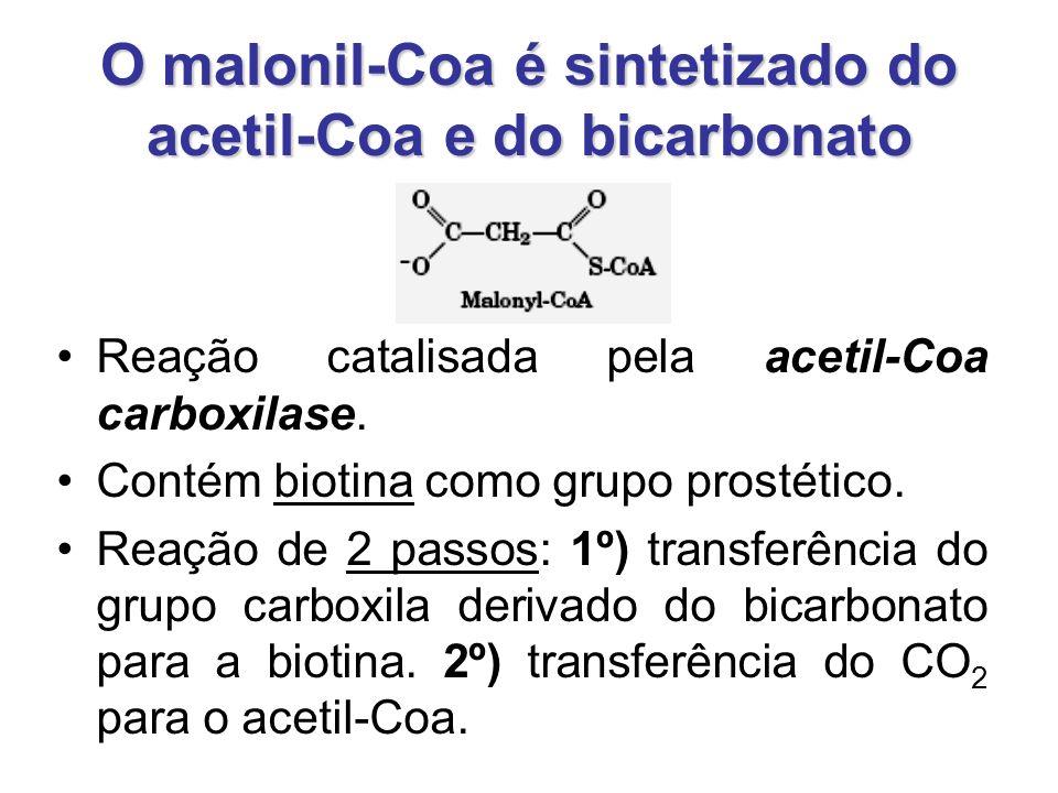O malonil-Coa é sintetizado do acetil-Coa e do bicarbonato