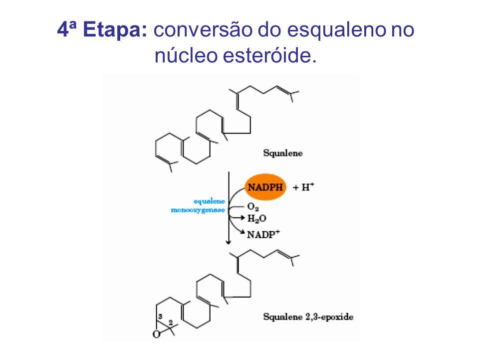 4ª Etapa: conversão do esqualeno no núcleo esteróide.