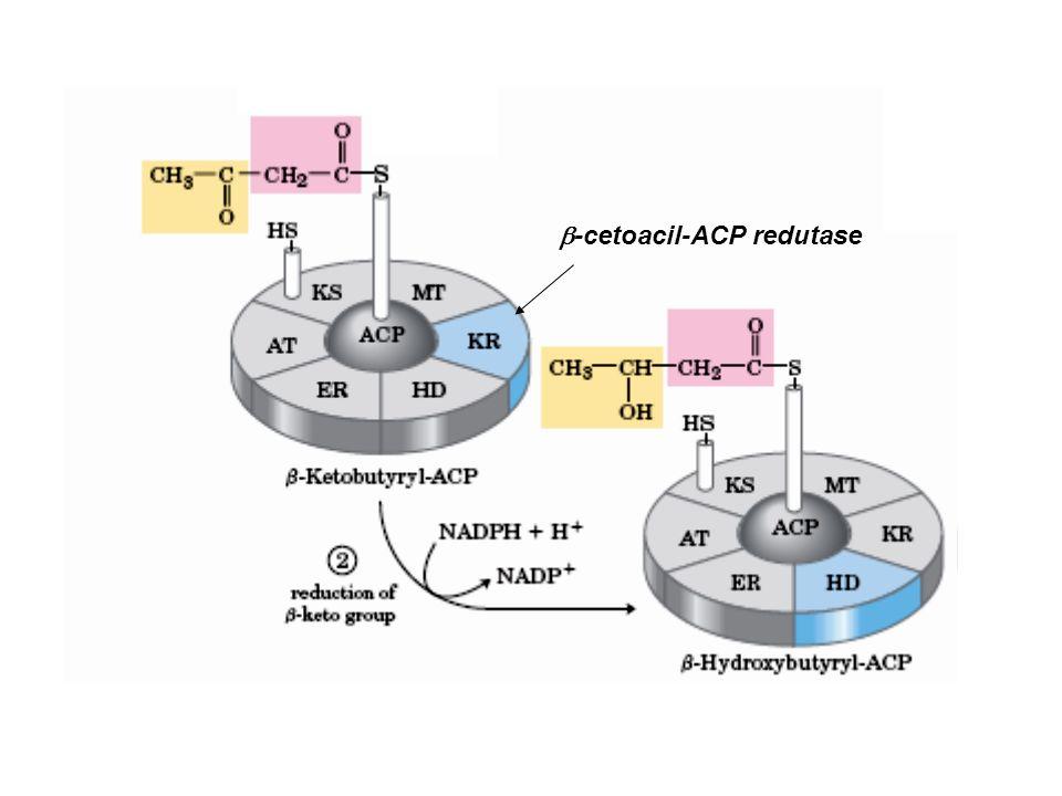b-cetoacil-ACP redutase