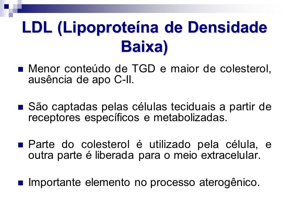 LDL (Lipoproteína de Densidade Baixa)
