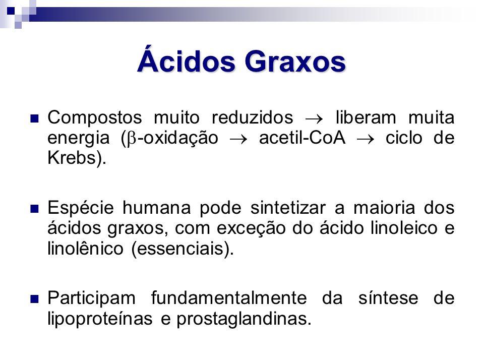 Ácidos Graxos Compostos muito reduzidos  liberam muita energia (-oxidação  acetil-CoA  ciclo de Krebs).