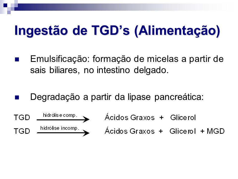 Ingestão de TGD's (Alimentação)