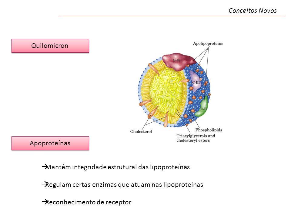 Conceitos Novos Quilomicron. Apoproteínas. Mantêm integridade estrutural das lipoproteínas. Regulam certas enzimas que atuam nas lipoproteínas.