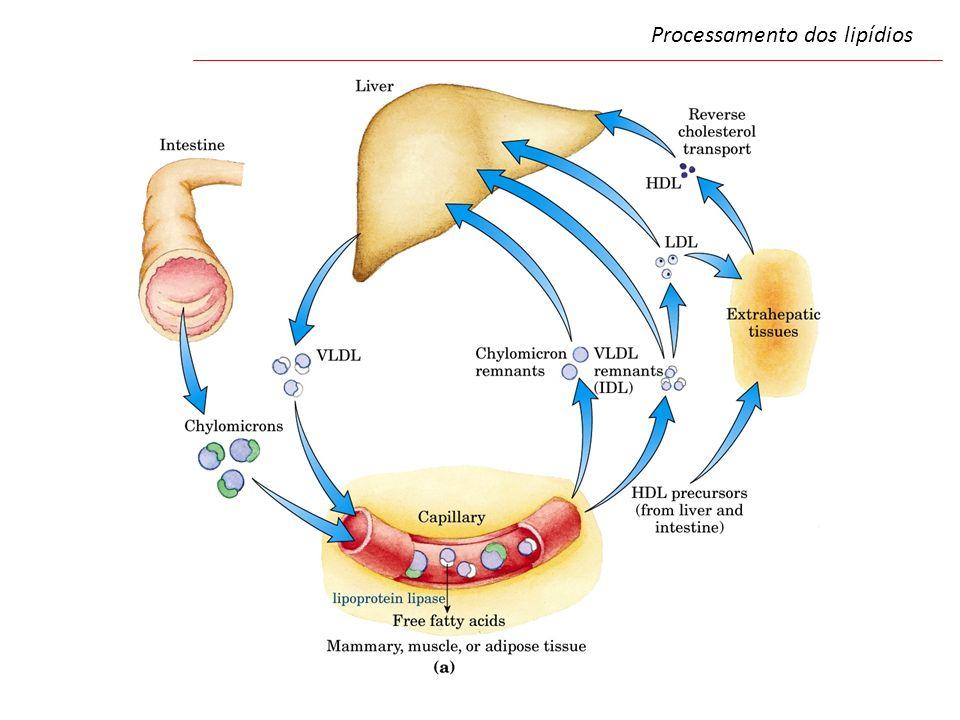 Processamento dos lipídios