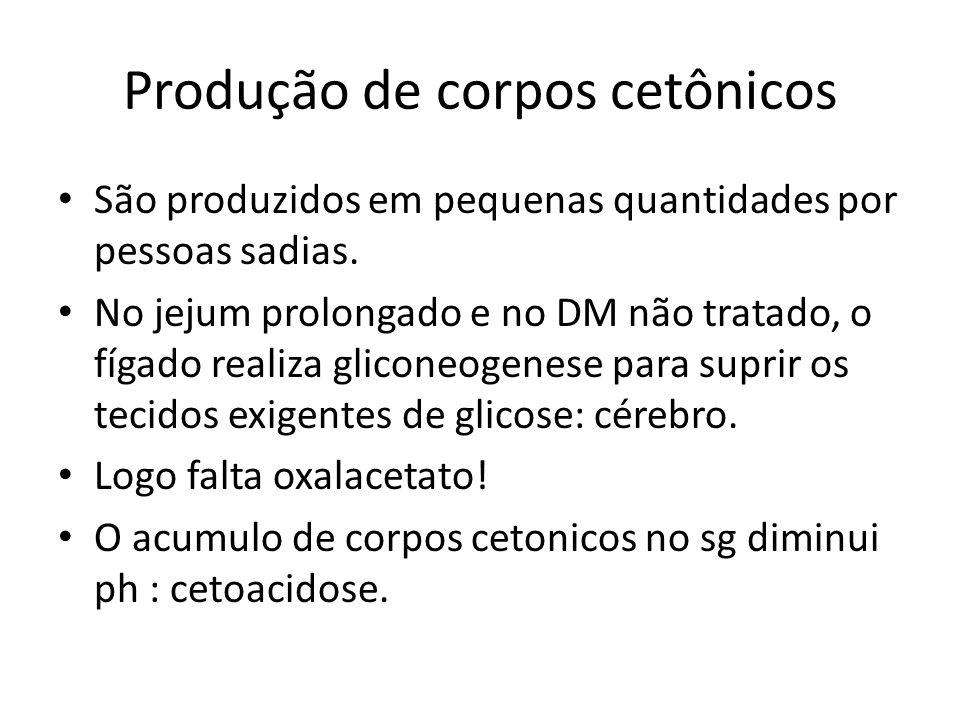 Produção de corpos cetônicos