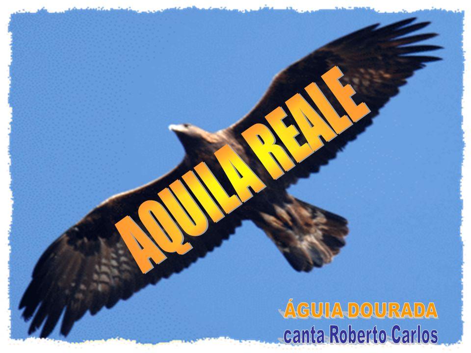 AQUILA REALE ÁGUIA DOURADA canta Roberto Carlos