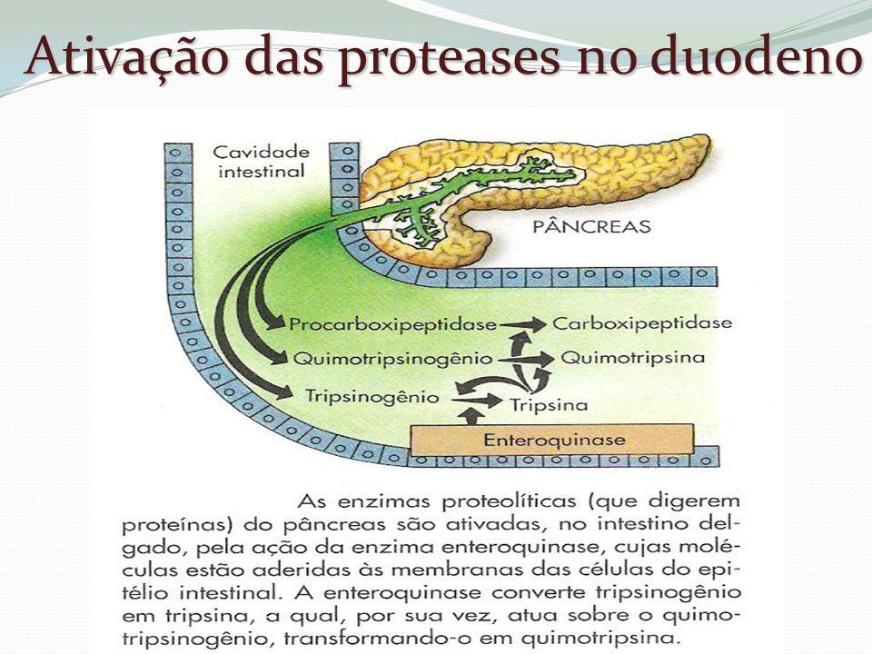 Ativação das proteases no duodeno