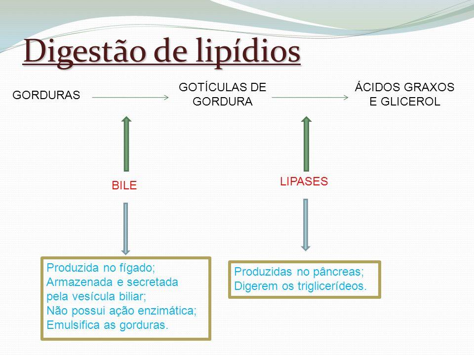 Digestão de lipídios ÁCIDOS GRAXOS E GLICEROL GORDURAS GOTÍCULAS DE
