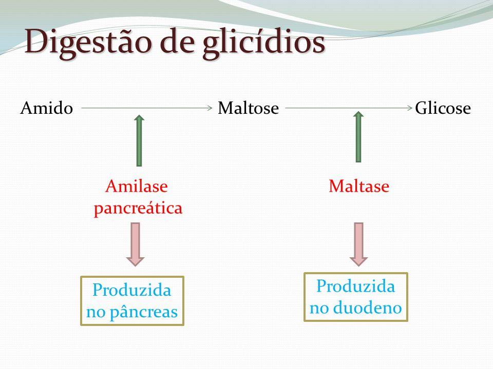 Digestão de glicídios Amido Maltose Glicose Amilase pancreática