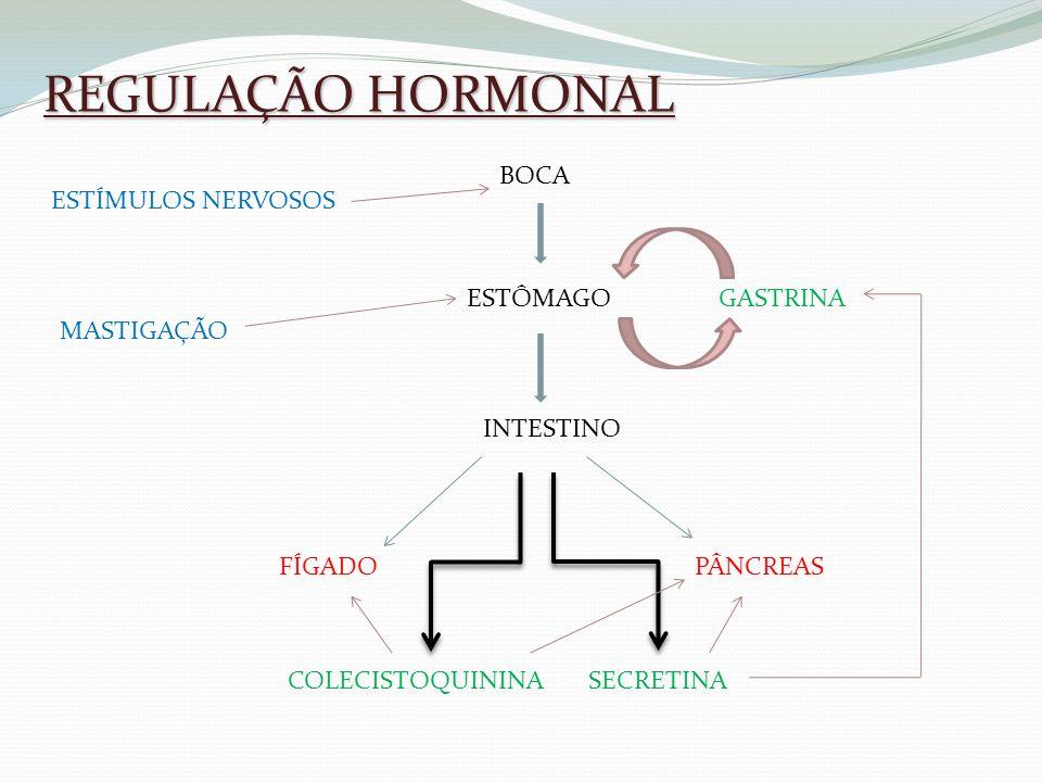 REGULAÇÃO HORMONAL BOCA ESTÔMAGO INTESTINO FÍGADO PÂNCREAS SECRETINA