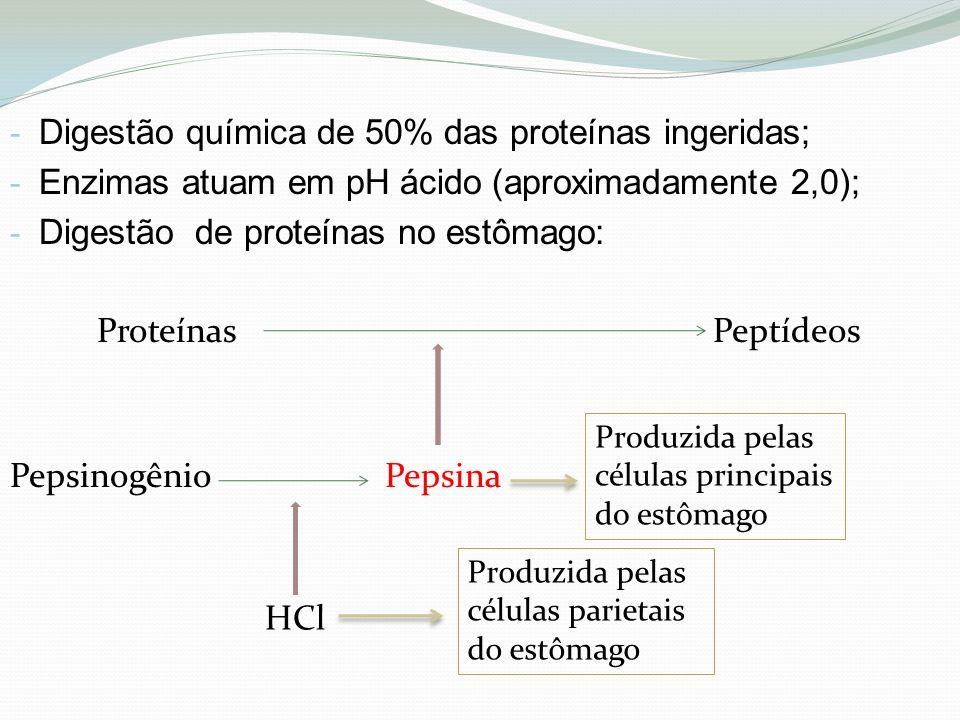 Digestão química de 50% das proteínas ingeridas;