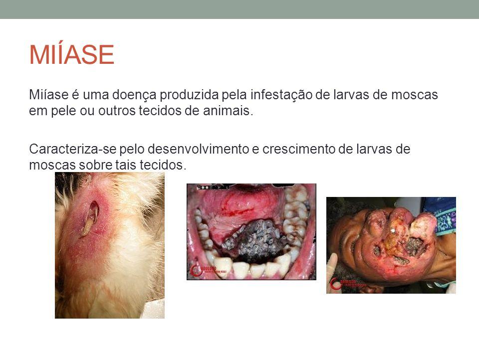 MIÍASE Miíase é uma doença produzida pela infestação de larvas de moscas em pele ou outros tecidos de animais.