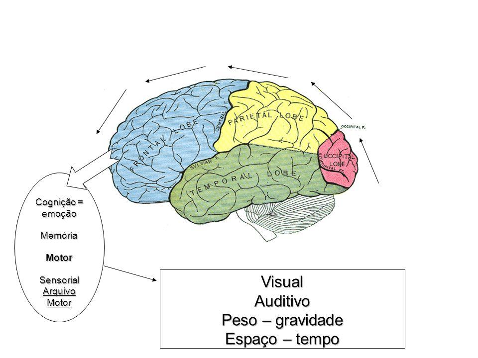 Visual Auditivo Peso – gravidade Espaço – tempo Cognição = emoção