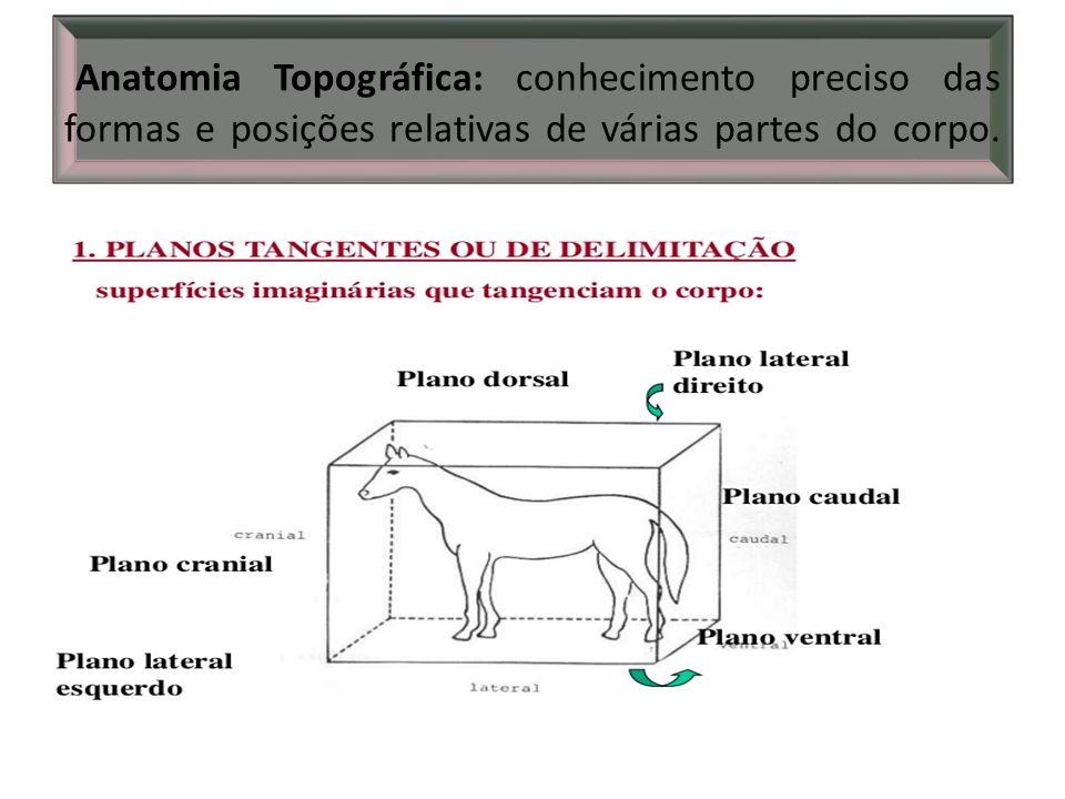 Anatomia Topográfica: conhecimento preciso das formas e posições relativas de várias partes do corpo.