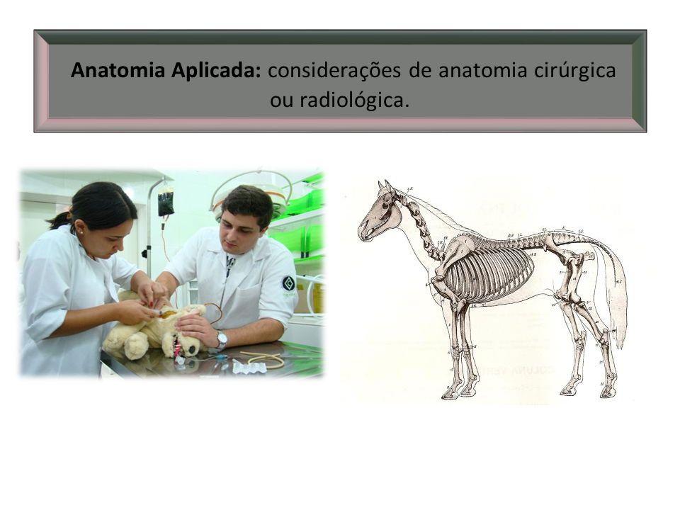 Anatomia Aplicada: considerações de anatomia cirúrgica ou radiológica.