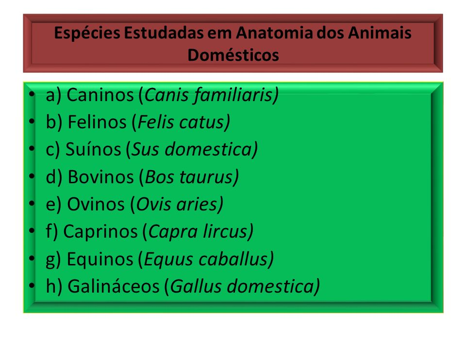 Espécies Estudadas em Anatomia dos Animais Domésticos